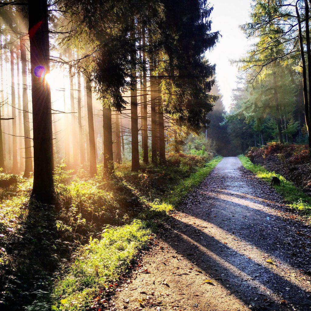Wschód słońca w lesie iglastym, droga leśna